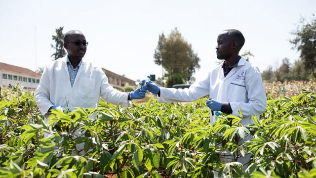 Career Opportunities in BSc Agriculture