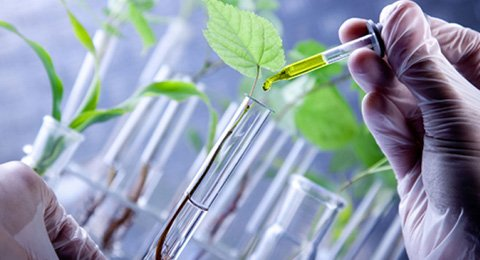Agricultural Biotechnology Jobs In Ghana